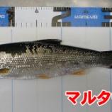 『刺し餌忘れた!日本海の黒鯛(チヌ)釣り#003』の画像