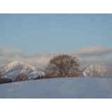 『小岩井一本桜と雫石スキー場』の画像