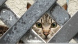 【悲報】我が家、知らん猫が入ってくる