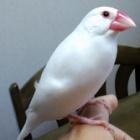 『猛文鳥注意』の画像