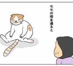 猫も肩が凝る?