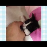 [子猫かわいい動画] 子猫が写真撮影中にうたた寝の写真