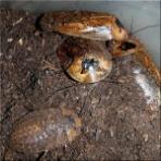 爬虫類や蟲たちの生態(別館)