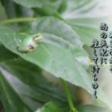 『あまがえる』の画像