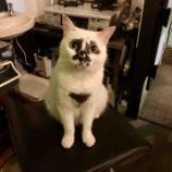 『Muddy Cat 定期便 8/2〜8/7』の画像