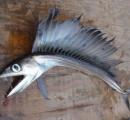 【画像】浜辺に打ち上げられた2メートルを超える怪魚に地元はパニック!…鋭い牙のある深海魚ミズウオ、米国の浜辺に打ち上げられる