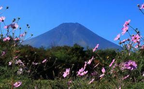 富士山は「何でも似合います」