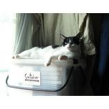 『猛暑・・猫も脱水状態?』の画像