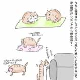 『🐱うちの猫🐱』の画像