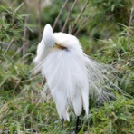 野鳥は可愛い♪ 2