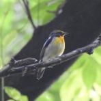 新・小鳥記(鳥好き中1男子の鳥日記)
