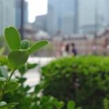 『【写真】 Xperia 5 作例  休日の東京駅2 + 小岩の花。』の画像