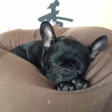 『お昼寝バット氏』の画像