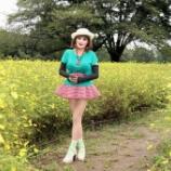 『昭和記念公園でレモンイエローに染まるコスモスと出会う』の画像
