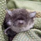 『岐阜のコウモリ多様性が高い谷』の画像