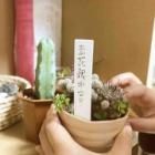 『進め!植物男子!』の画像