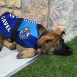 『警察犬をクビになったわんこ』の画像