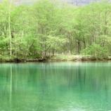 『朝のお散歩@美しい池のほとり』の画像