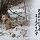 『野末に佇み母を想う老犬』の画像