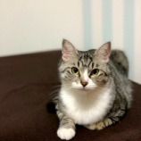 『iPhone XSで撮った猫写真を自慢したいだけ(笑)』の画像