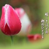 『鬱金香』の画像