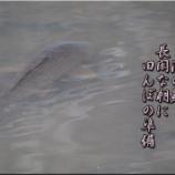 『池の鯉』の画像