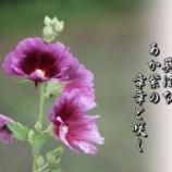 『葵ばな』の画像