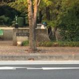 『上戸田イルミネーションが後谷公園に設置されました。点灯式を待つばかりです!』の画像