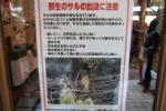 最近、交野市内で『野生のサル』が出没するみたい!~近づいたりしないようにしましょう~
