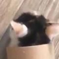 【子ネコ】 床に「筒」が転がっていた。ころろ~ん♪ → 子猫はこうなる…