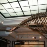 海の恐竜って恐ろしいよな・・・