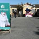 スターケネルのblog Cattery Asiastar
