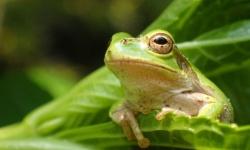 『イッテQ!』でカエルを雑に扱う企画に批判続出