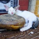 『【マジで猫天国 ピピ島】島内散策 & ツアー探し【格安ツアー&ビール】』の画像