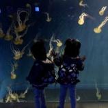 『江の島水族館はクラゲも主役!!』の画像
