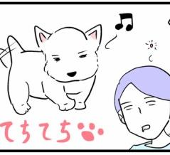 犬は何故磯の香がするのか。