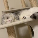 指原莉乃の猫がアレと似てるwww