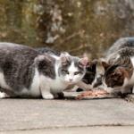野良猫に餌あげてたらクソジジイが怒鳴ってきた…心臓が飛び出るかと思ったわ…