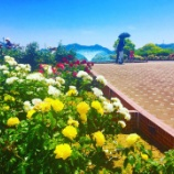 『今治市の大島の「よしうみバラ公園」と「亀老山展望台」に今年も行ってみた!夏は特にオススメ!』の画像
