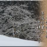 『雪神やどり』の画像