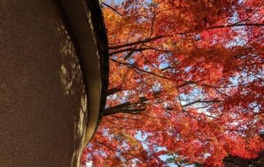 『【7日目】そうだ 京都、行こう 2019/11/30(土)【最終日】』の画像