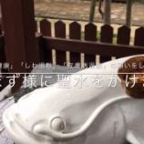 『いつか行きたい日本の名所 豊玉姫神社』の画像