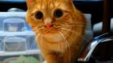 年明けたし、猫自慢していく(※画像あり)