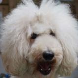 『ワイズドギー看板犬たちのほのぼの日記』の画像