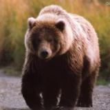 大きな熊の足跡!早朝早朝だけ釣りが出来る板小屋沢の写真
