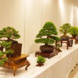 『戸田市文化会館で「盆栽&フラワーアレンジメント」展覧会 6月11・12日(土日)開催』の画像