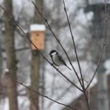 『野鳥がいっぱい』の画像