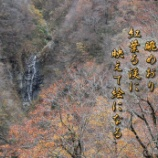 『紅葉る渓』の画像