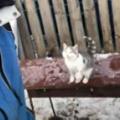 ネコが庭に置いてあるテーブルの上にいた。飼い主にジャンプ♪ → ロシアではこうなります…