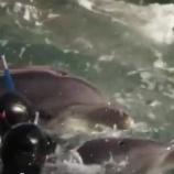 『赤ちゃんイルカを拉致する様子』の画像